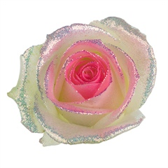 Avalanche Bling Bling Pink Rose