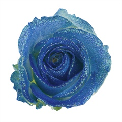 Avalanche Glitter Look Blue Rose