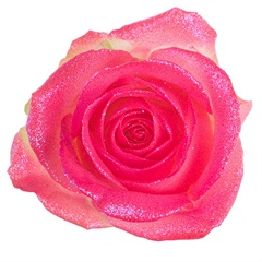 Avalanche Glitter Look Pink Rose